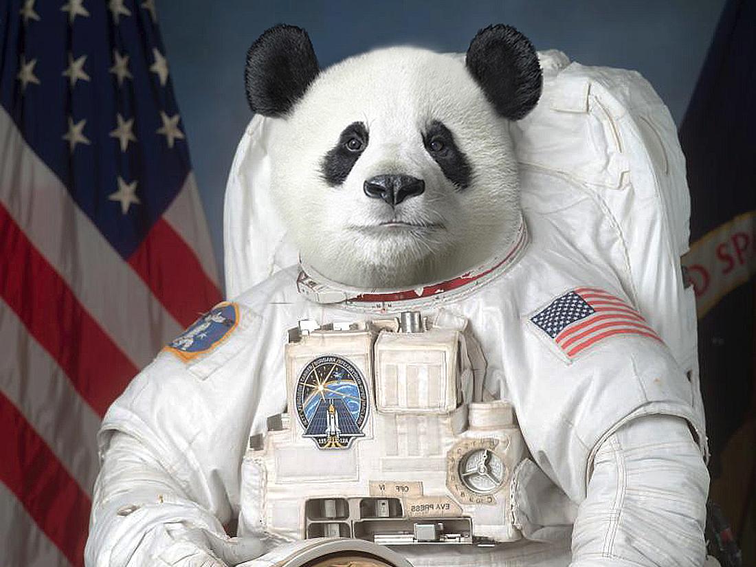 panda-mini